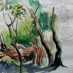 La Gomera, Parc National de Garajonay : las Creces