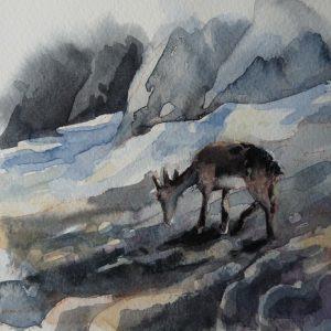 Jeune chamois près du col de Susanfe, aquarelle (21 x 13,5 cm)